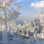 frost-magical-ice-of-siam-6
