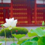 kyoto-byodoin-temple-02