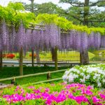 kyoto-byodoin-temple-04